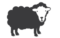 Grass-Fed Lamb - Organic & Pasture Raised!